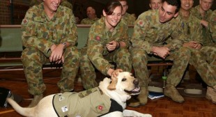 Murray the assistance dog Labrador enlisted in the Australian Army