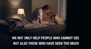 Heart wrenching video – The Royal Dutch Guide Dog Foundation (KNGF) commercial for veteran dogs