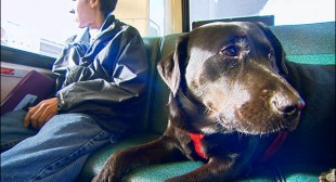 Seattle dog who rides the bus by herself now part of a children's book